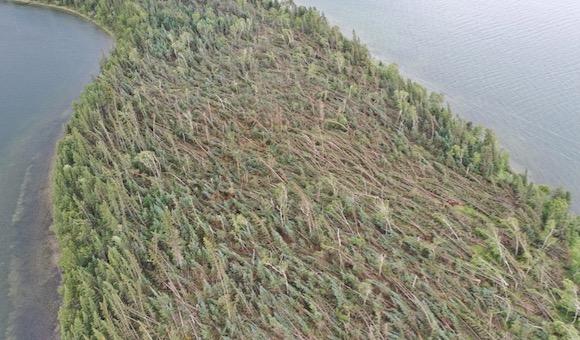 Treefall in Saskatchewan
