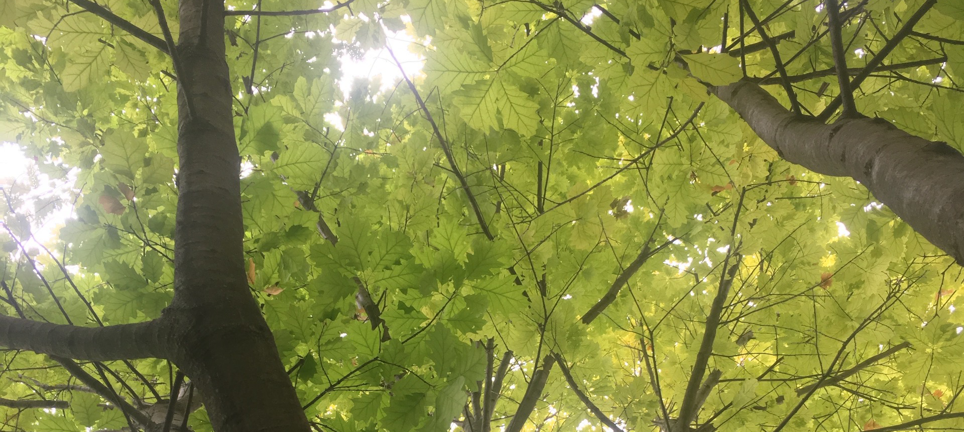 A close up photo of a tree's branches and leaves